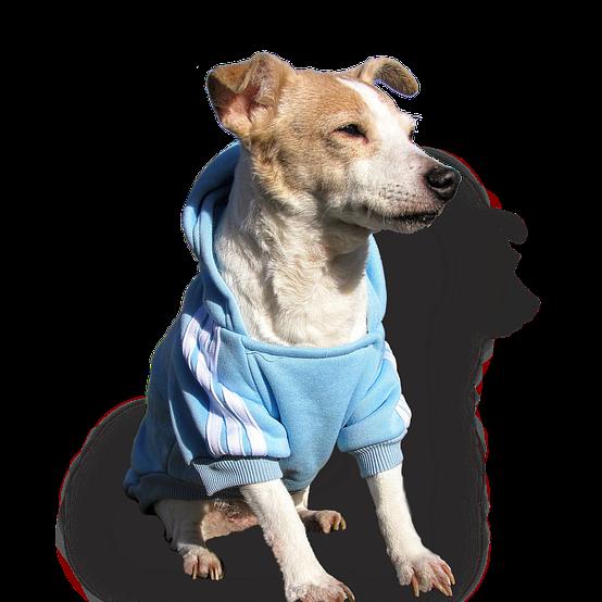doggy-3554450_960_720